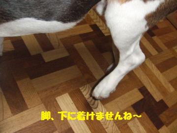 041_convert_20100711233558.jpg