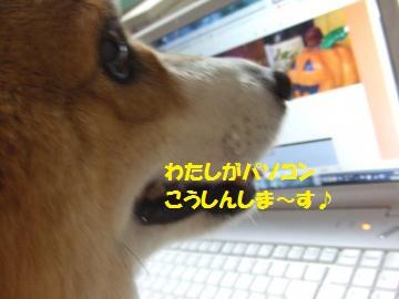 041_convert_20101008000630.jpg