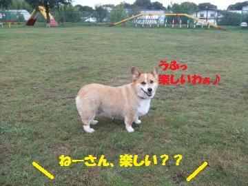 043_convert_20100810024306.jpg