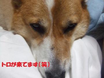 049_convert_20100718234005.jpg
