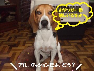 049_convert_20101104000950.jpg