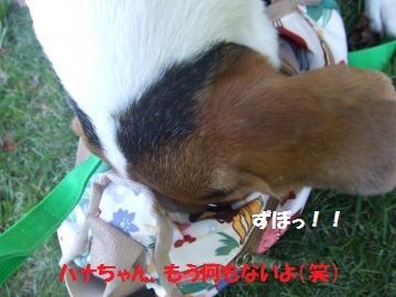 061_convert_20101013005037.jpg