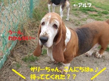 065_convert_20101116010452.jpg