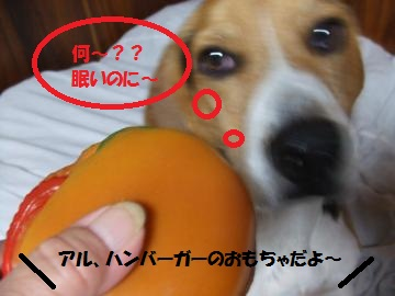 071_convert_20101128235634.jpg