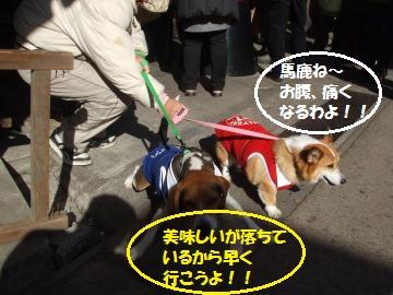 073_convert_20110110225155.jpg