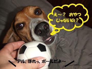 076_convert_20101128235732.jpg