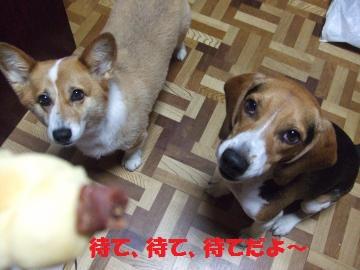 085_convert_20100726014136.jpg