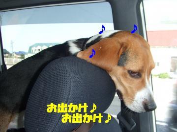 アルフ車中