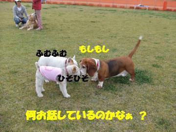 3匹(バセ他)