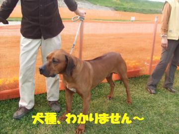 超大型犬(?)