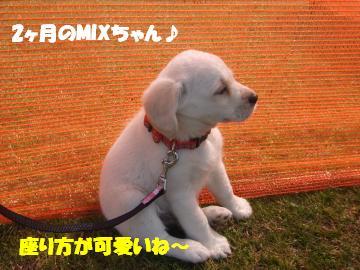 mixちゃん