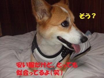 2010_07100003_convert_20100725235523.jpg