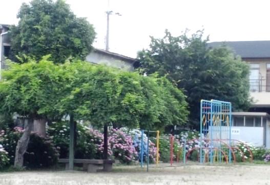 2011ajisai.jpg