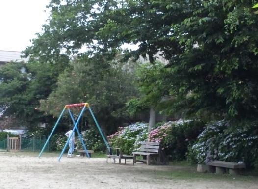 2011ajisai2.jpg