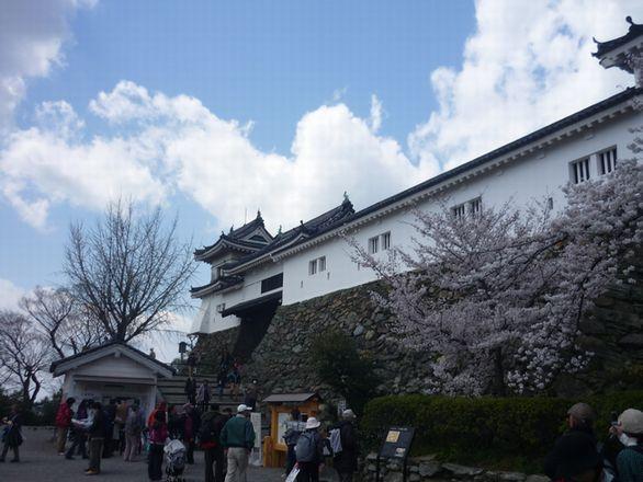 2012sirosakura2.jpg