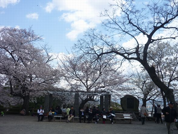 2012sirosakura3.jpg