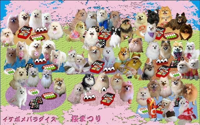 桜祭り(ラムも)3