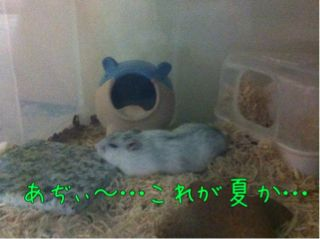 iphone_20110813224505.jpg