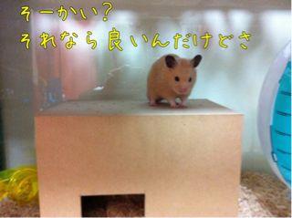 iphone_20110819223636.jpg