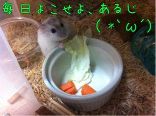 iphone_20110821231010.jpg