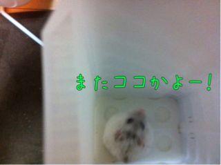 iphone_20110824223841.jpg
