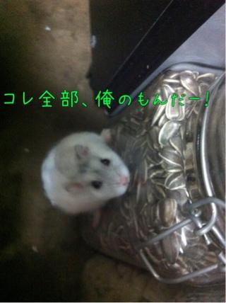iphone_20110905231146.jpg