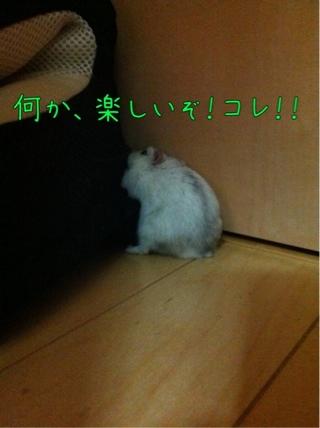 iphone_20110909072506.jpg