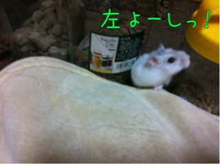 iphone_20110912114558.jpg