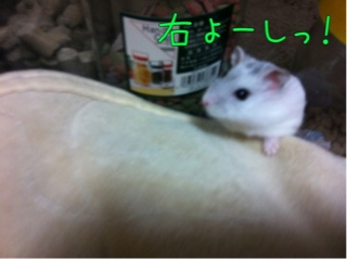iphone_20110912114703.jpg