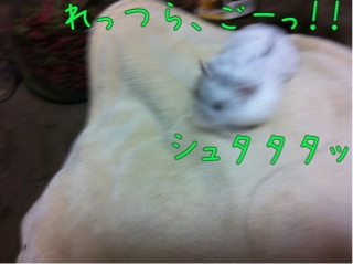 iphone_20110912114712.jpg