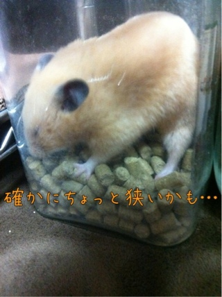 iphone_20110913224300.jpg