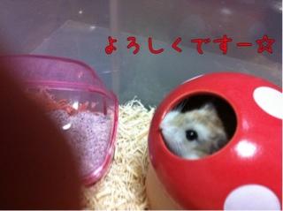 iphone_20110916222647.jpg