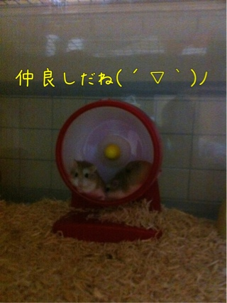 iphone_20110916222656.jpg