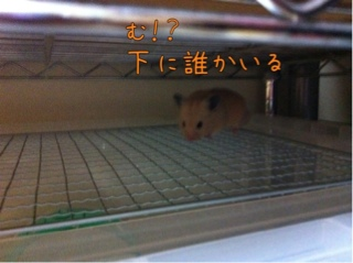 iphone_20110921225912.jpg