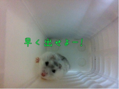 iphone_20110928173904.jpg