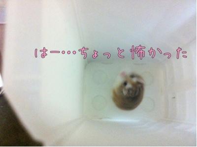 iphone_20110928173922.jpg
