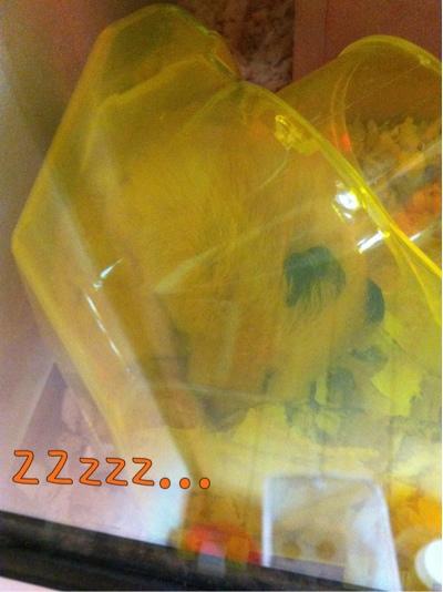 iphone_20110929222350.jpg
