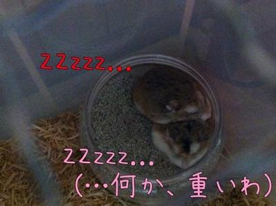 iphone_20111001212939.jpg