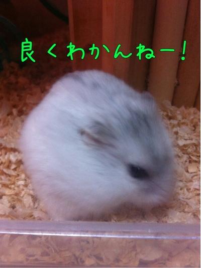 iphone_20111005142415.jpg