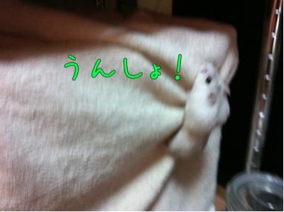 iphone_20111014231832.jpg