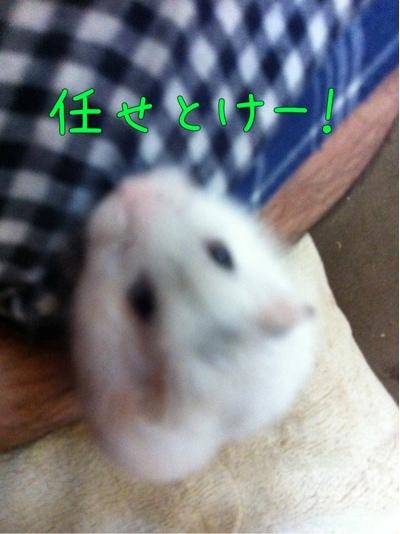 iphone_20111018210548.jpg