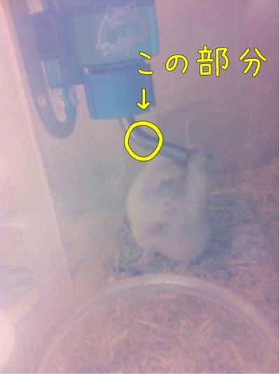 iphone_20111025213732.jpg