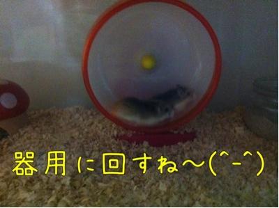 iphone_20111030220409.jpg