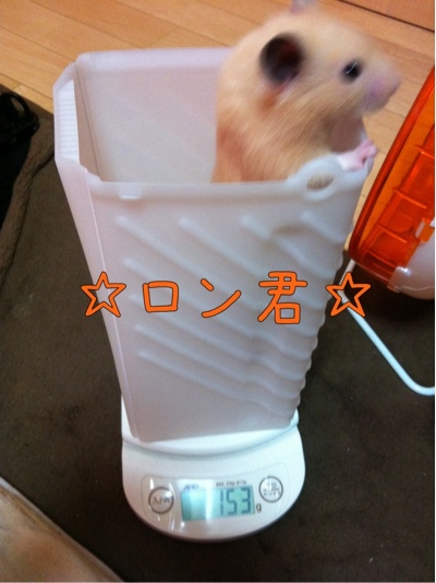 iphone_20111101225522.jpg