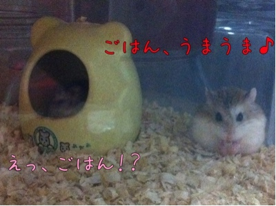 iphone_20111104170054.jpg