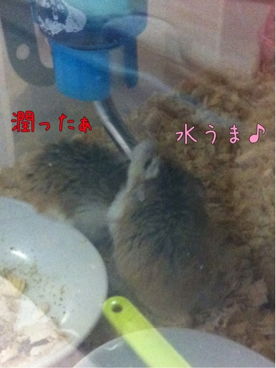 iphone_20111118221023.jpg