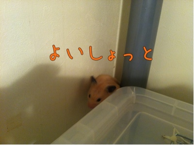 iphone_20111119081611.jpg