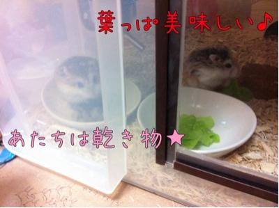 iphone_20111125080645.jpg