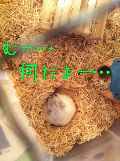 iphone_20111128134253.jpg