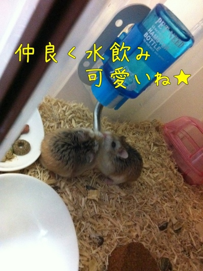 iphone_20111129223124.jpg